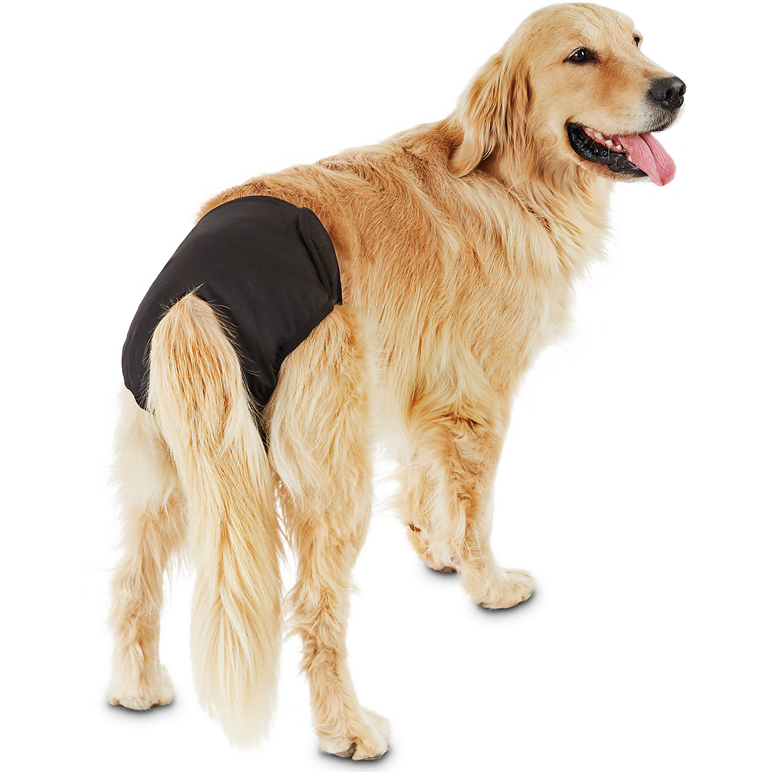 So Phresh Washable Diaper for Dogs, X-Large