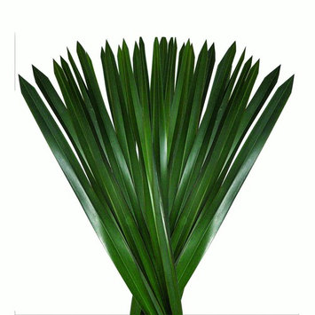 Natural Fresh Flowers and Greens - Green Flax Leaves, 200 Stems