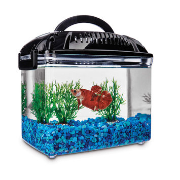 Imagitarium Betta Fish Dual Habitat Tank in Black, 0.8 gal.