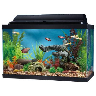 Top Fin® 10 Gallon Hooded Aquarium, Black