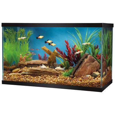 Grreat Choice® 10 Gallon Glass Aquarium size: 10 gal