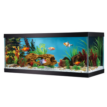 Grreat Choice® 20 Gallon Glass Aquarium size: 20 gal