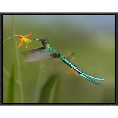 Global Gallery Long-Tailed Sylph Feeding on Flower Nectar, Jurong Bird Park, Singapore by Tim Fitzharris Framed Photographic Print on Canvas