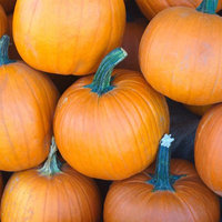 Mountain Valley Seed Company Pumpkin Garden Seeds - Sugar Pie Variety - 4 oz - Non-GMO, Heirloom Pumpkins - Great for Pies and Canning - Vegetable Gardening Seed