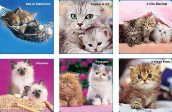 Hi-Look Inc. Keith Kimberlin Kittens II assorted