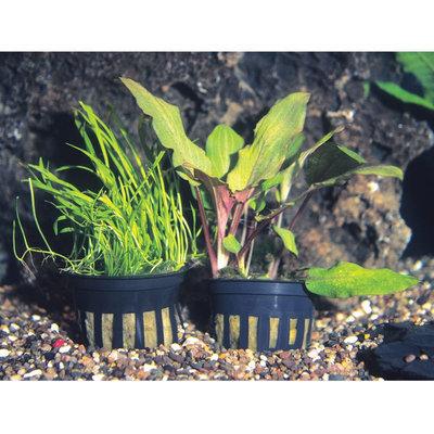 Petsmart Potted Plant, Multi-Color