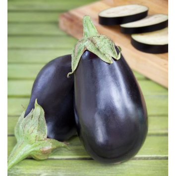 Bonnie Plants 4.5 in. Black Beauty Eggplant