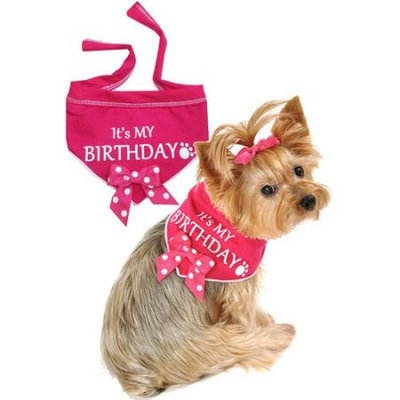 Dig Pets IS-618272S 8-14 in. Its My Birthday Scarf Pink - Small