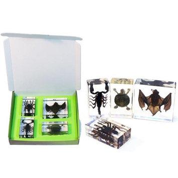 ED Speldy East DDC02 Bat Turtle & Black Scorpion Collection Real Tarantula - 4 Piece