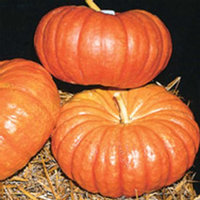 Mountain Valley Seed Company Organic Cinderella Pumpkin Garden Seeds - 4 oz - French Heirloom Pumpkins - Non-GMO - Red-Orange Variety - Vegetable Gardening Seed