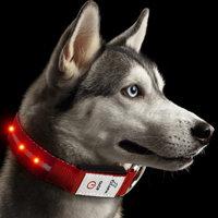 JuzPetz Rechargeable LED Dog Collar Red - Medium
