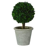 Small Boxwood Topiary Green Smith & Hawken