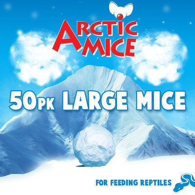 All Living Things Large Frozen Mice size: 50 Count