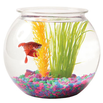 Grreat Choice® 1 Gallon Fish Bowl size: 1 gal
