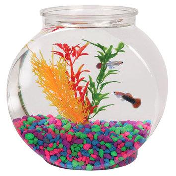 Grreat Choice® .5 Gallon Fish Bowl size: 0.5 gal