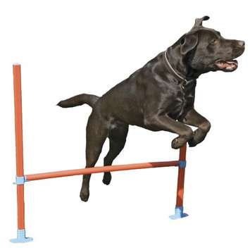 Rosewood Agility Hurdle for Dogs