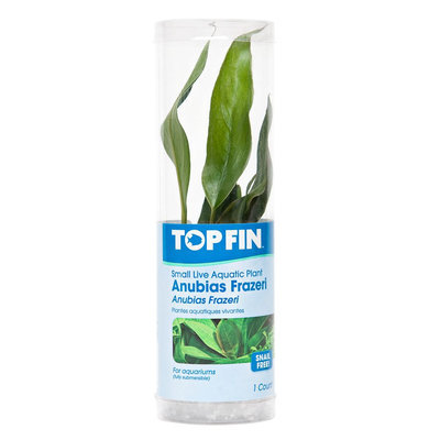 Top Fin® Anubias Frazeri size: Small