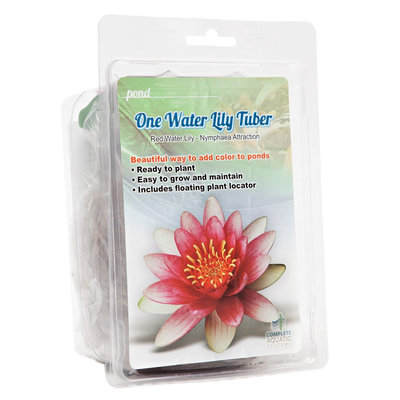 Complete Aquatic Systems Water Lily Tuber, Multi-Color