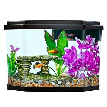 Top Fin® Delight Aquarium
