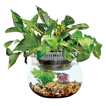 Top Fin® Aquaponics Cultivate 1 Gallon Desk Aquarium size: 1 gal