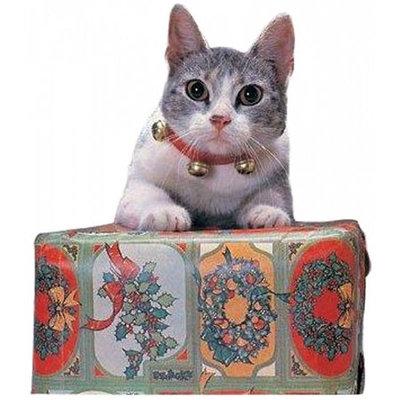 Xmas46 Rubies - Jingle Cat Collar (421) /Gadgets