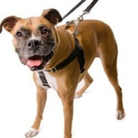 2 Hounds Design Freedom No-Pull Dog Harness Training Package Leash
