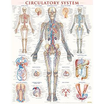 BarCharts 9781423224174 Circulatory System