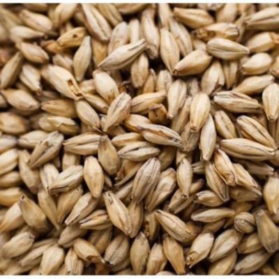 Briess Munich 10L Brewing Malt Whole Grain 1lb Bag