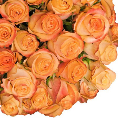 Fresh Cut Peach Roses, 20
