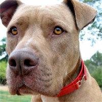 Diva-Dog DD298 Double D Collar - Medium