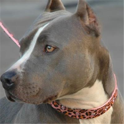 Diva-Dog DD600 Pink Panther Collar - XXSmall