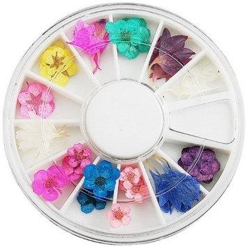 60PC wonderful design DRIED FLOWER Nail Art