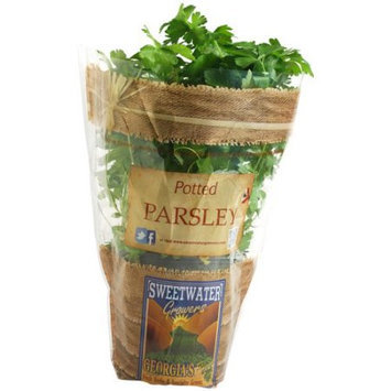 Sweetwater Growers Potted Parsley