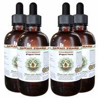 Strawberry (Fragaria vesca) Glycerite, Organic Dried Leaf Alcohol-Free Liquid Extract, Wild Strawberry, Glycerite Herbal Supplement 4x4 oz