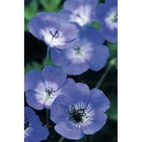 Van Zyverden Longest Blooming Hardy Geranium Rozanne Root Set
