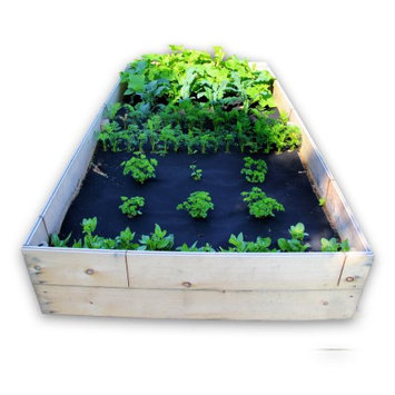 Seedsheet 48 in. x 96 in. Raised Bed Garden Smoothie Kit with Spinach, Parsley, Carrots, Kale and Cucumber