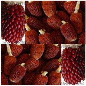 1oz (300+ seeds) RED STRAWBERRY POPCORN Corn seeds DECORATIVE PRETTY MAIZE mahogany red kernel