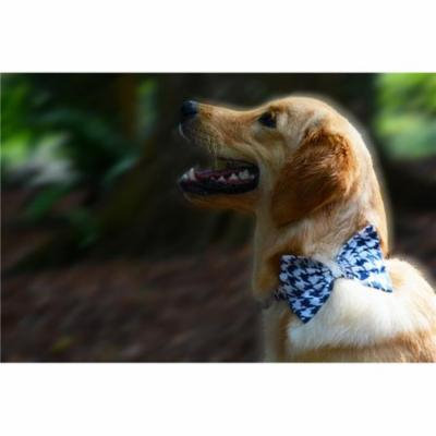 Heads Up for Tails HUFTAC 167 Navy Hounds Tooth Dog Bow Tie, Extra Large