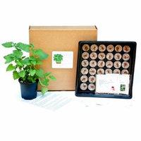 Tea Herb DIY Starter Growing Kit - Learn how to grow home grown tea herbs