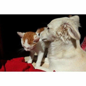 LAMINATED POSTER Cat And Dog Kitten Cute Together Close Cat Dog Poster Print 24 x 36