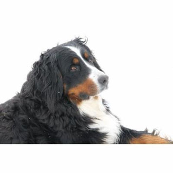 LAMINATED POSTER View Animals Dog Pet Poster Print 24 x 36
