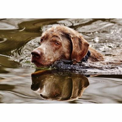 LAMINATED POSTER Water Dog Swim Funny Animal Pet Cute Wet Poster Print 24 x 36