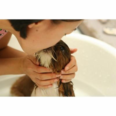 LAMINATED POSTER Dara Bath Puppy Kiss Water Pet Dogs Dog Poster Print 24 x 36