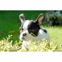 LAMINATED POSTER Dog Canine Small Pet Domestic Puppy Adorable Poster Print 24 x 36