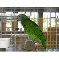 Laminated Poster Pet Small Parrot Parakeet Cage Birds Green Poster Print 24 x 36