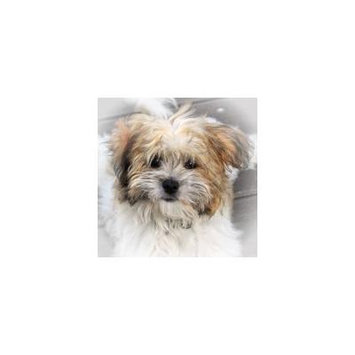 LAMINATED POSTER Wildlife Photography Small Dog Terrier Pet Dog Poster Print 24 x 36
