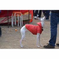LAMINATED POSTER Animal Pet Race Greyhound Jacket Dog Breed Poster Print 24 x 36
