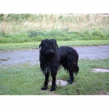 LAMINATED POSTER Wäller Black Dog Pet Animal Poster Print 24 x 36