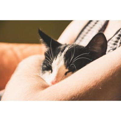 LAMINATED POSTER Pet Animal Domestic Cat A Young Kitten Cat Kitten Poster Print 24 x 36