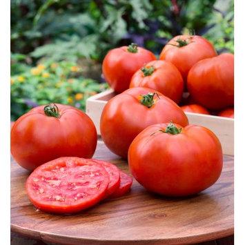 Bonnie Plants 4.5 in. Better Boy Tomato